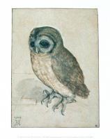 Owl, 1508 by Albrecht Dürer