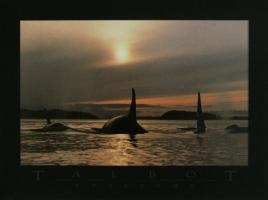 Twilight/Orca by Bob Talbot